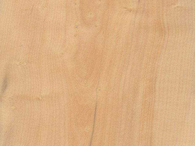 текстура древесины самшита