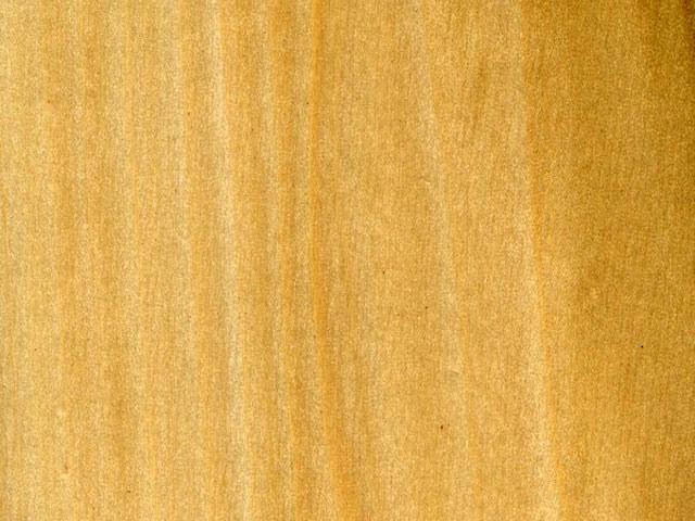 текстура древесины тополя