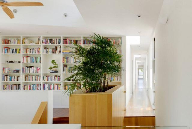 Декоративные комнатные деревья в интерьере