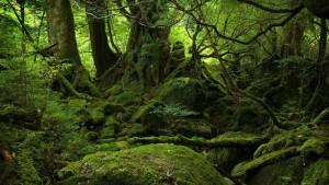 факты о деревьях