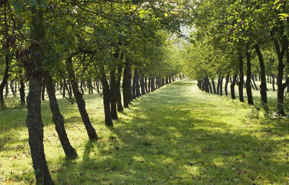 Деревья - растения многолетние
