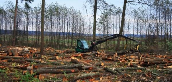 Вырубка леса и глобальное потепление