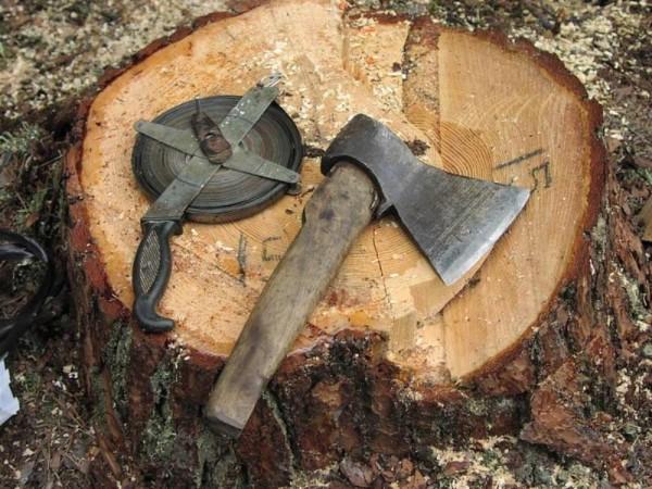Почему опасна незаконная вырубка деревьев